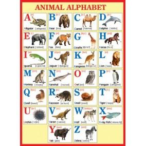 Плакат. Animals alphabet