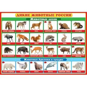 Плакат. Дикие животные России