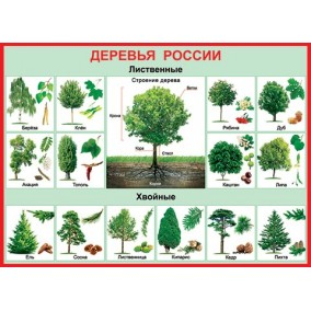 Плакат. Деревья России